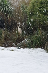 Heron in snow