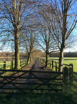 Gate with tree lined path