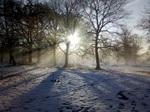 Snowy field with sun shining through trees