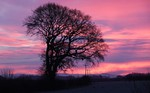 Tree with a red sunset background