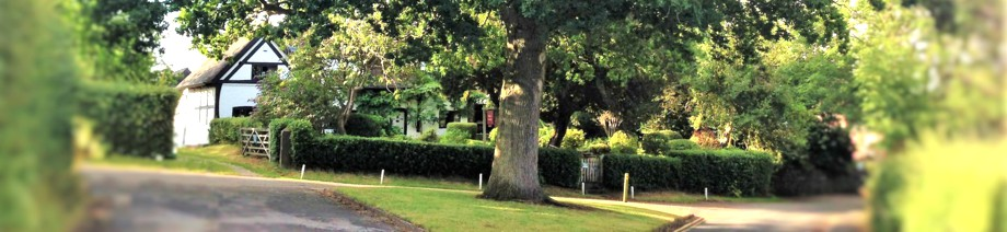 Oak tree in front of White Cottage